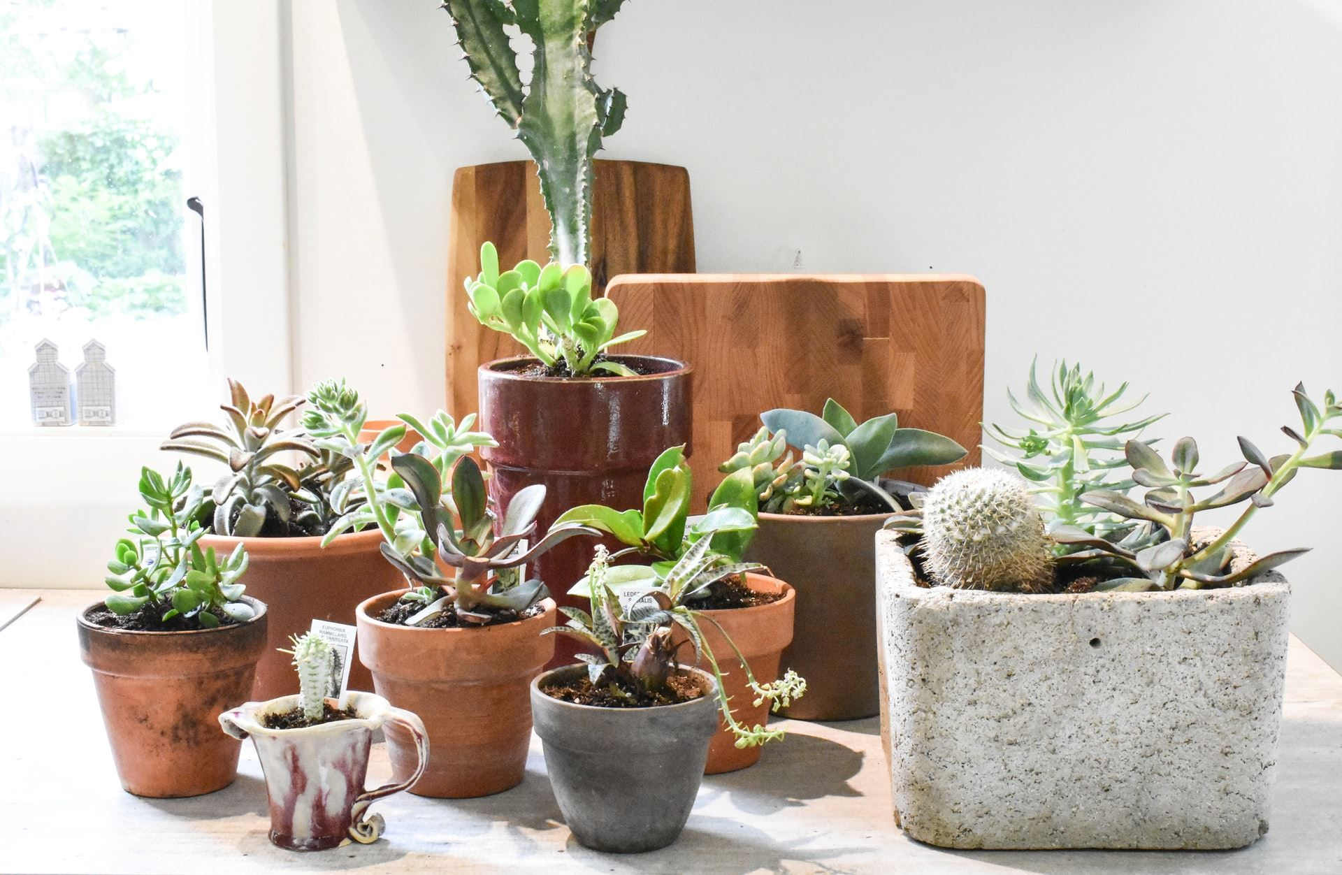 Houseplants 101